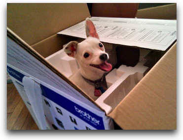 georges doggie int he box!