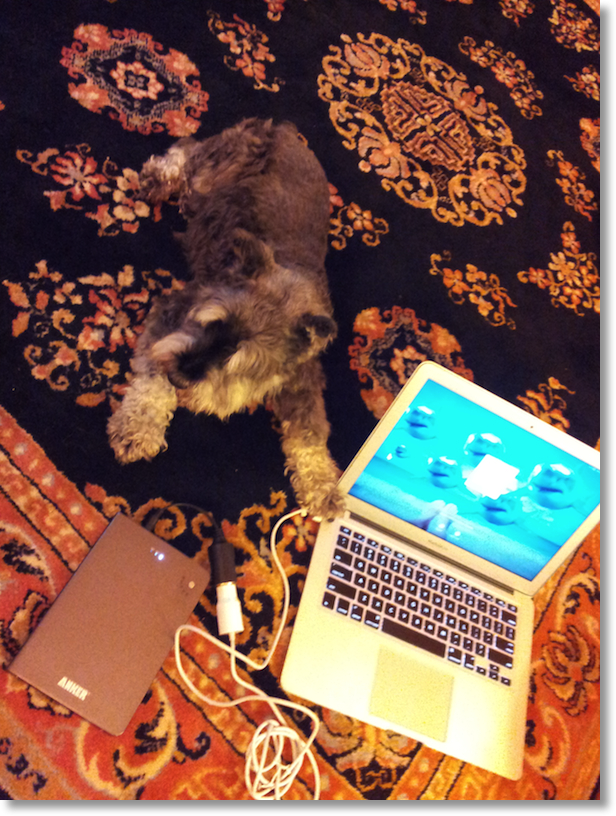 George's Schnauzer posing with the Macbook Air and the Anker charger